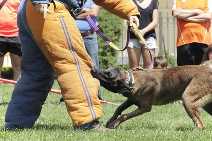 Kurs na instruktora szkolenia psów